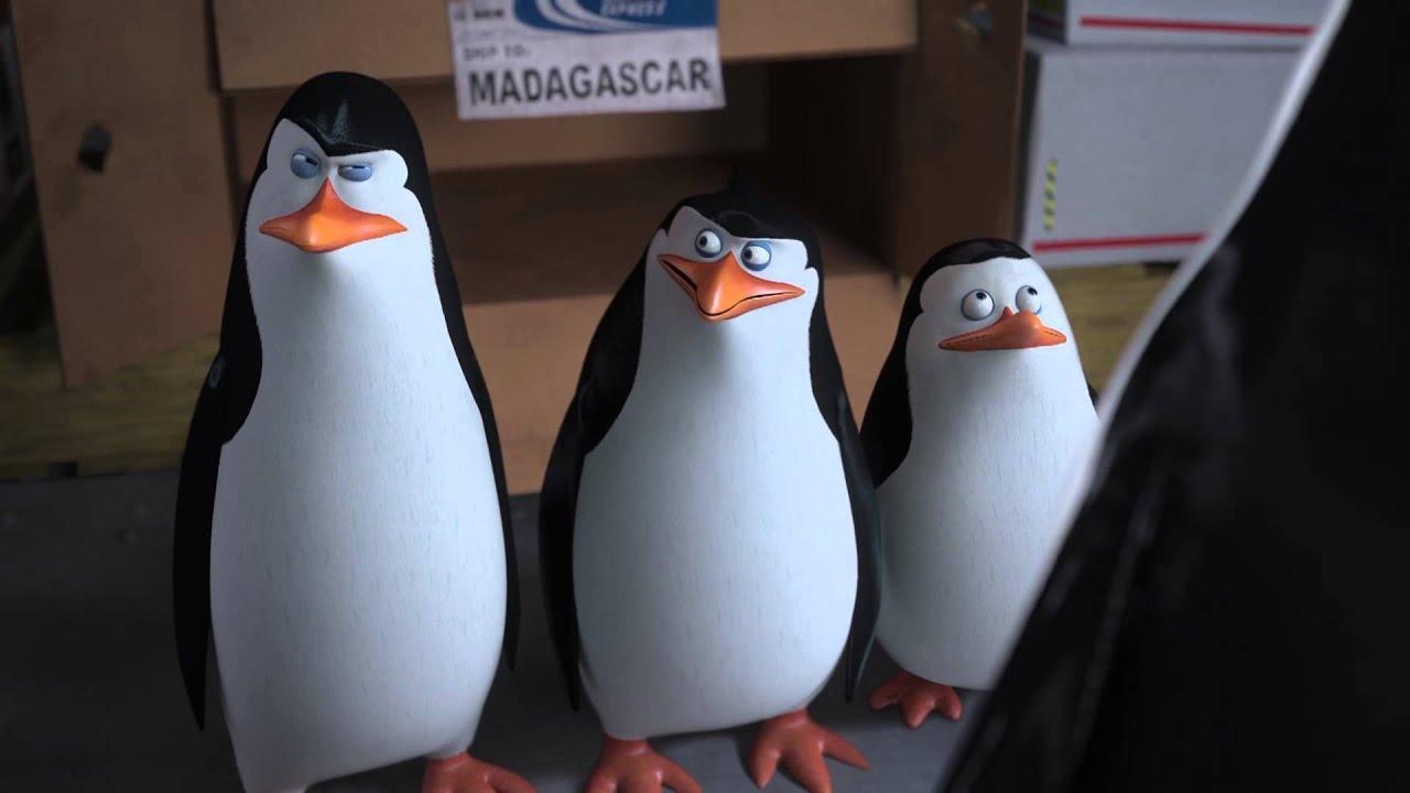 Trailer Pinguine