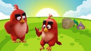 Angry Birds. РОЗЫГРЫШ. Энгри бердз близнецы. Мультики для детей.