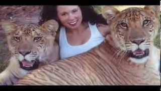 Liger - grösste Katzen der Welt