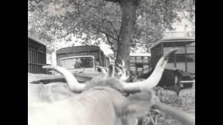 La vie autrefois, le marché aux bestiaux de Rabastens de Bigorre en 1970