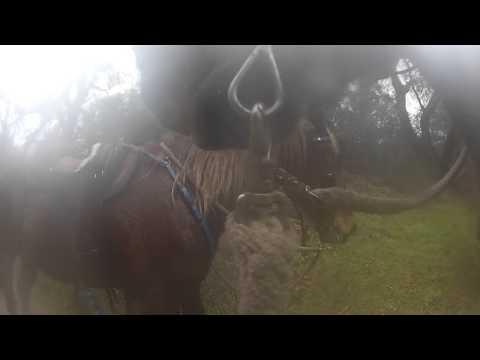 Michelle horseback riding