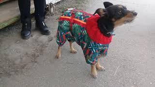 Шью одежду для собак
