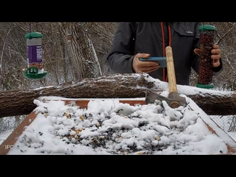 Bird Feeder Live Stream, Central Bulgaria