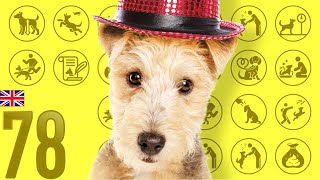 Lakeland Terrier❤Cute and Funny Dog breed videos