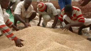 Helping prison farms cope with the effects of drought in Zimbabwe