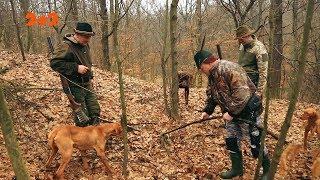 Хто тероризує українські Карпати?