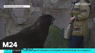 Как происходит кормление животных в Московском зоопарке - Москва 24