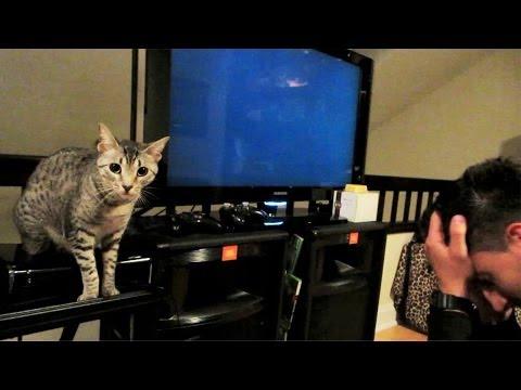 MY CAT PRANKED ME!!!
