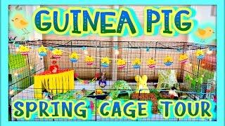 Guinea Pig Spring Cage Tour | April 2015