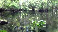 150 Backcountry Hikes: Hiking Julington Durbin Preserve in Jacksonville to Durbin Creek