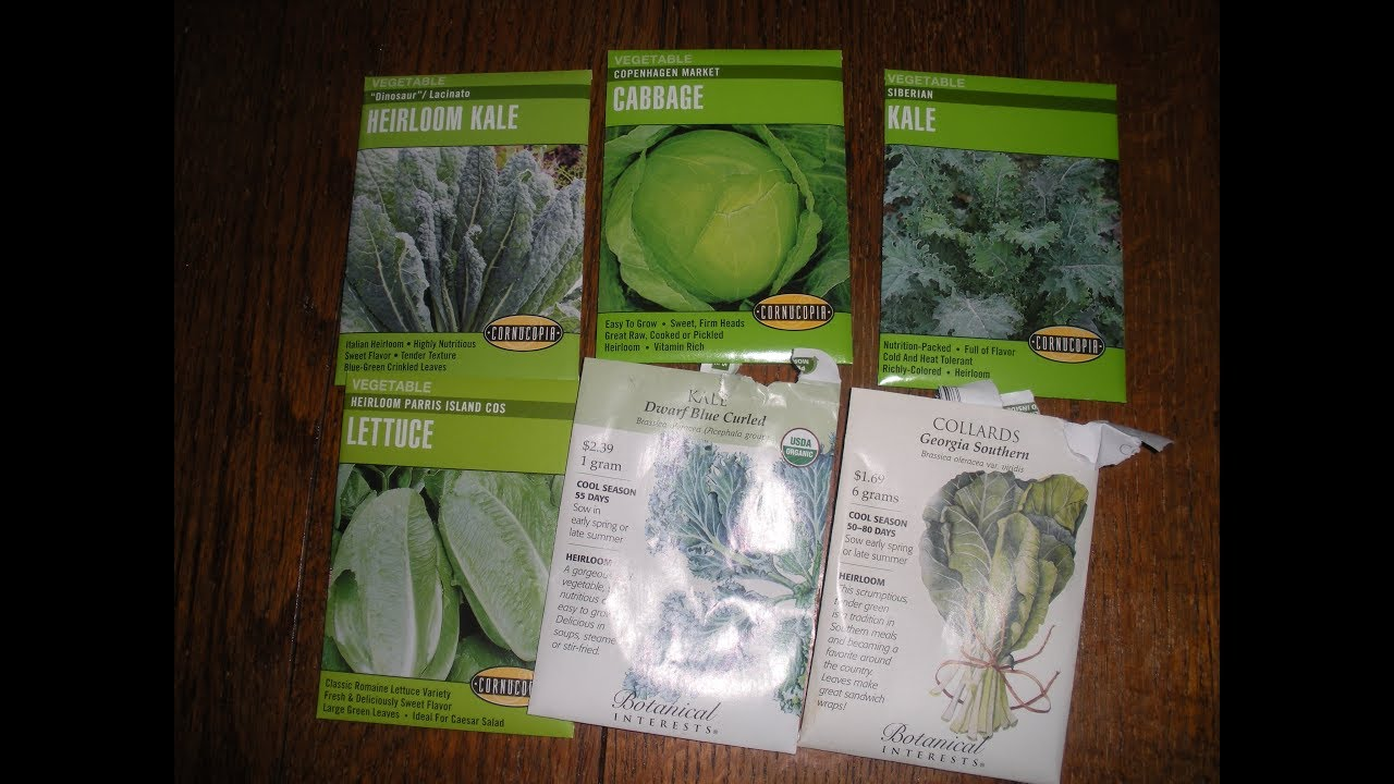 seeds for my summer fall winter garden 2017 youtube