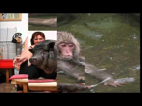 смешные названия животных, прикольные картинки с животными ...