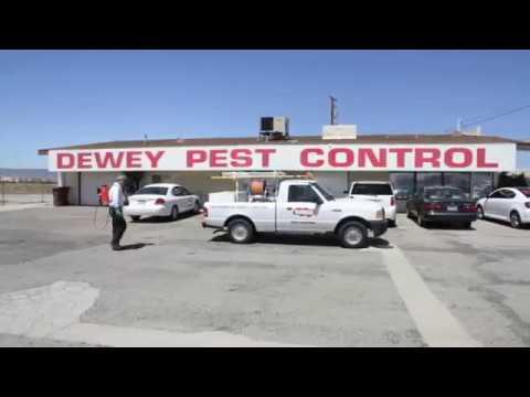 Dewey Pest Control and Termite Control - Pest Control Services