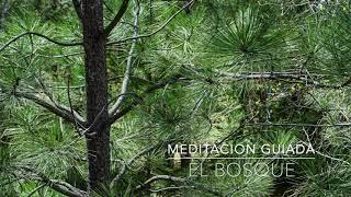 EL BOSQUE: Meditacion Guiada de 5 Minutos | A.G.A.P.E. Wellness
