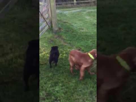 Flora finds her first ball