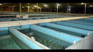 Segrest Farms Breeding Facility and University of Florida Aquaculture Lab-Traveling the fish scene-