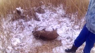 Охотники нашли на окраине села трупы диких кабанов