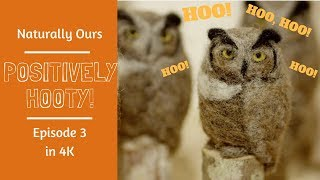 Hooting Over Salt Spring Island's Owls : Episode 3 of Naturally Ours in 4K