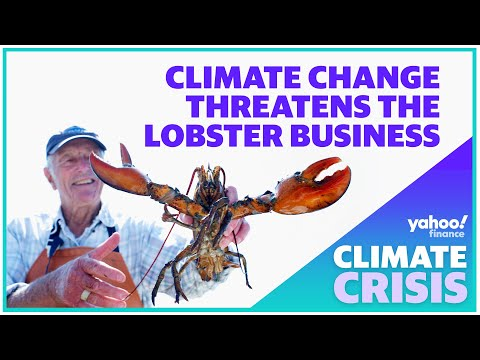 Climate Change Threatens Lobster Businesses In The U.S.
