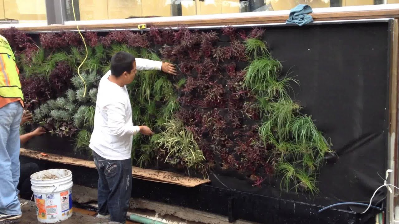 Proceso muro verde chili 39 s plaza mayor leon gto youtube for Antorchas para jardin caseras