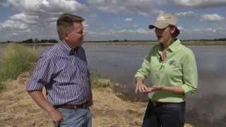 Montna Rice Farm - America's Heartland