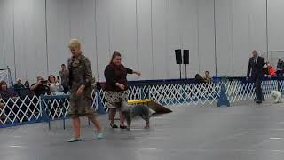 Tualatin Kennel Club - Thursday, Jan 18th - Best In Show (Judge: Ms Sharol Candace Way) thumbnail