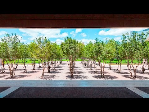 Harriet Pattison Projects: The Kimbell Art Museum [1 of 8]