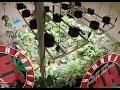 Indoor Organic Cannabis Ocean Grown Style COB LED Cycle 2 No Till 7
