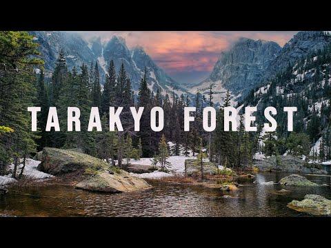 TARAKYO FOREST JAPAN