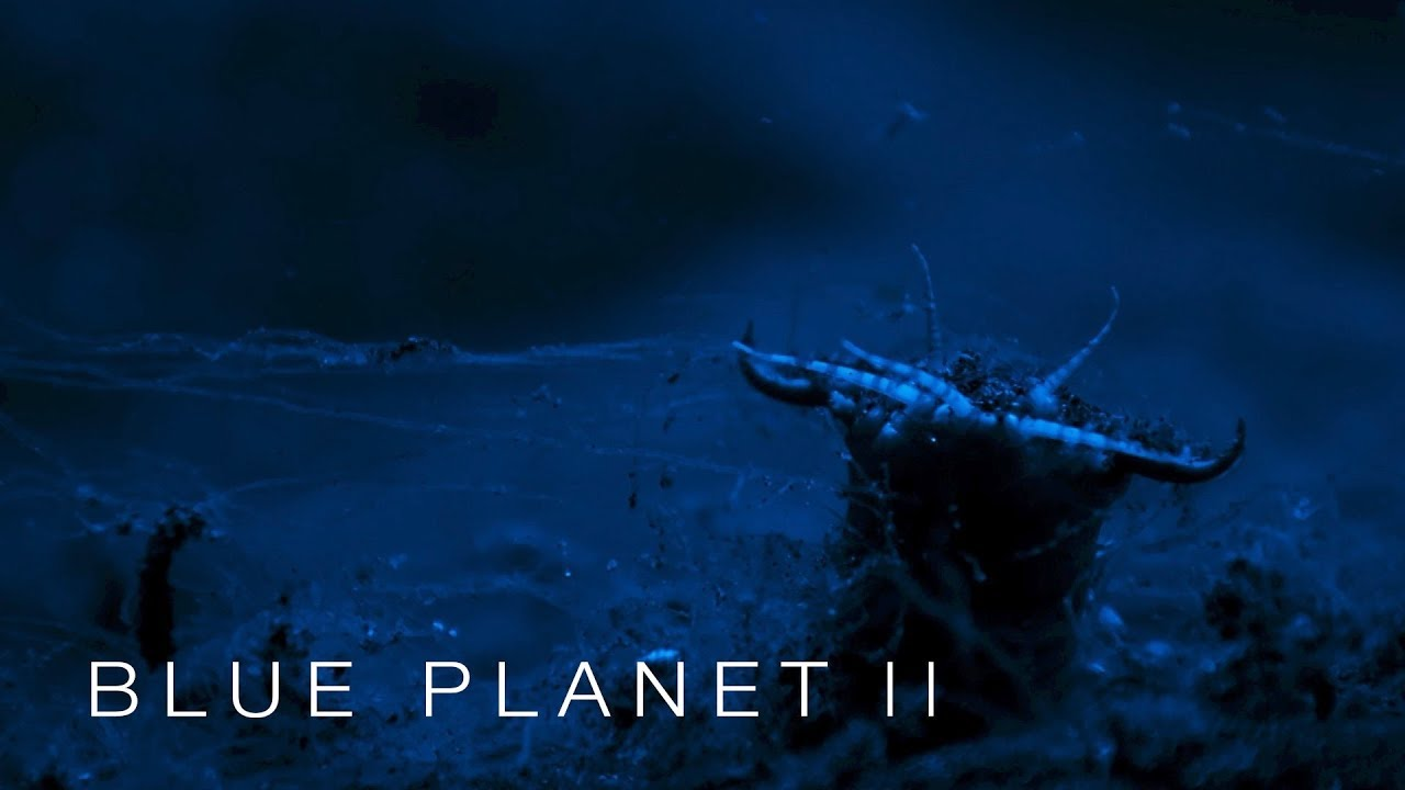 Beware the Bobbit worm - Blue Planet II: Episode 3 - BBC One