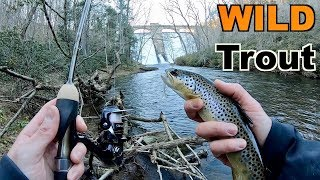 Catching WILD Trout with NEW Rods!! (DANGEROUS Winter Wade Fishing)