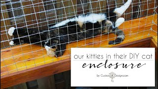 our cat enclosure