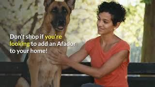 dogs / afador