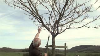 Repeat youtube video Obstbaum richtig schneiden - Obstbaumschnitt, Pflegeschnitt 10- bis 15-jähriger Baum