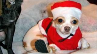 Jingle Barks (jingle Bells - Holiday Hounds, Jingle Bell Dogs)