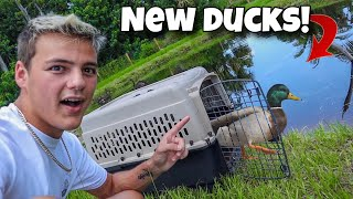 NEW DUCKS for My BACKYARD POND!!!