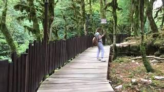 Самшитовый лес Сочи