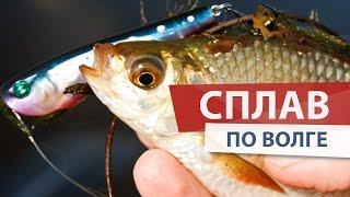 Рыбалка НА ПОППЕРЫ. Поймал ЩУКУ и красноперку