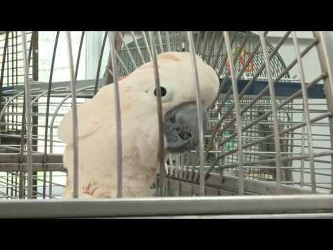 Parrot Island Sanctuary – a COF grant recipient