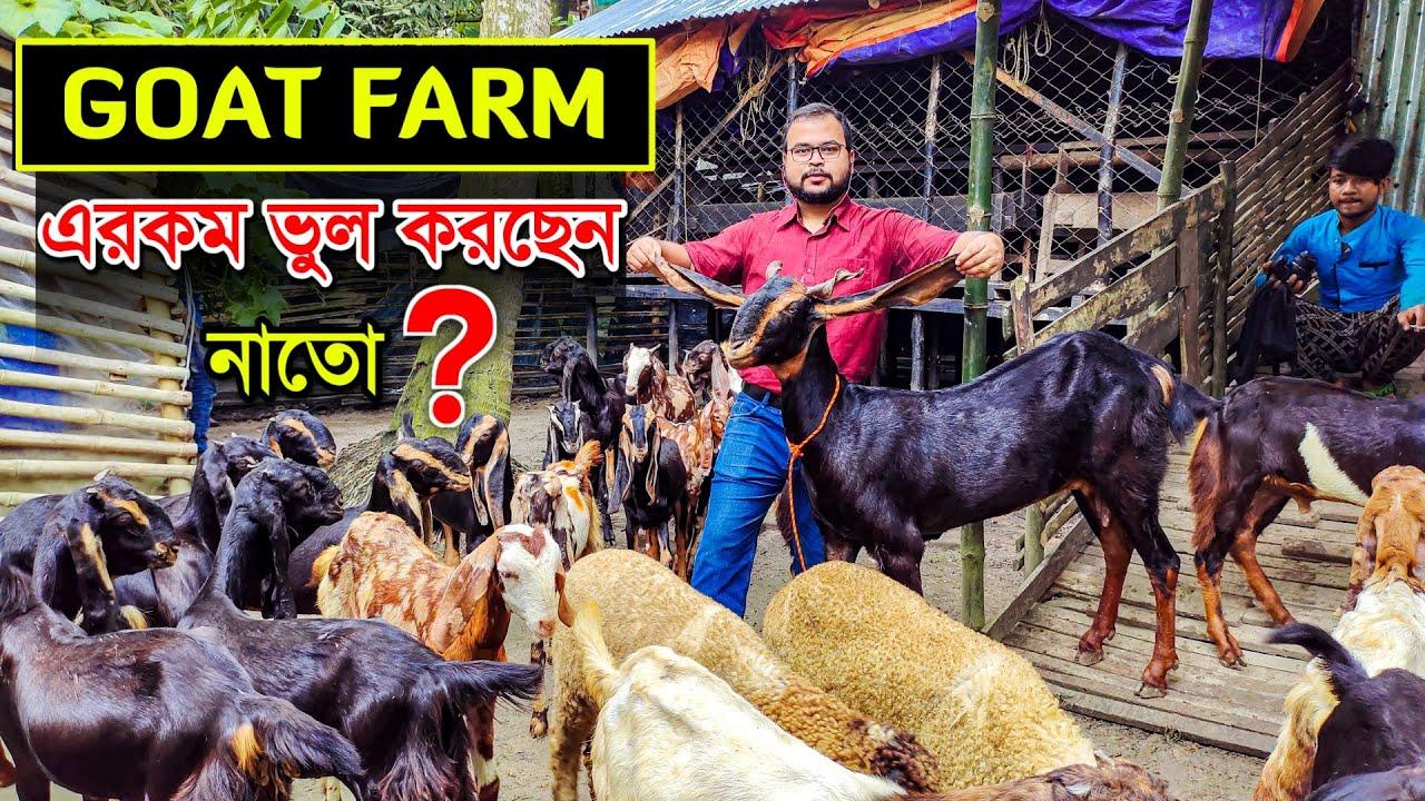 আপনার GOAT FARM -এ এইরকম ভুল করছেন নাতো 🙅 | Goat Farming in West Bengal | ছাগল পালন পদ্ধতি