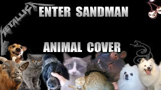 Baixar Metallica - Enter Sandman (Animal Cover)