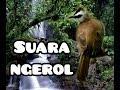 Suara Kicau Burung Trutukan Burung Crocokan  Mp3 - Mp4 Download