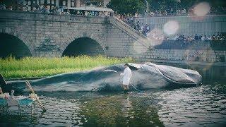¿Una ballena varada en Madrid?