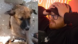 Fake Dog Rescue Videos Need to Stop