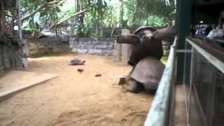 Schildkröten Sex Fail