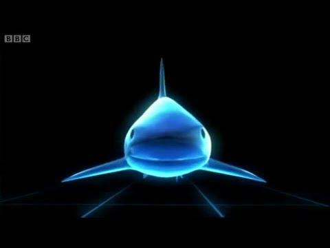 3D Shark: How do Sharks work?