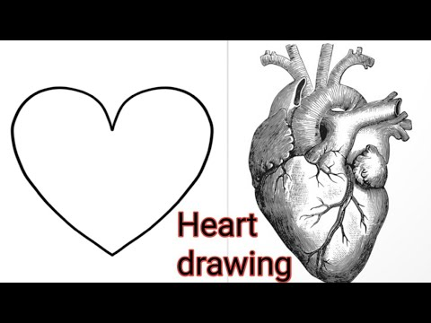 How to draw Human Heart Step by step for beginners /#akash ...