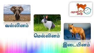 #AranTamil தமிழ் |வல்லினம் மெல்லினம் இடையினம் | Tamil  Vallinam Mellinam Idaiyinam for Kids