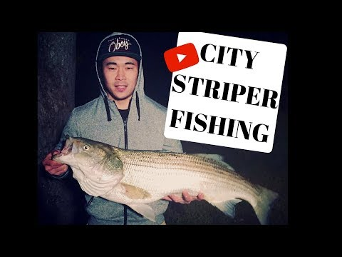 SEARCH For MONSTER Striped Bass On SKETCHY Bridge! (RICHMOND VA)