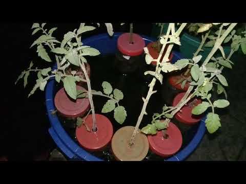 Penampakkan  vertikultur, budidaya ikan lele dalam ember, hidroponik di malam hari